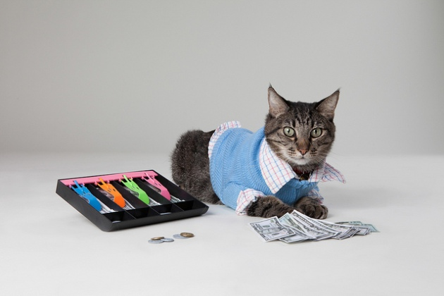 Max the Accountant Cat_cpa candidates_adam greene cpa_cpa exam