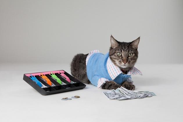 Max the Accountant Cat_cpa candidates_adam greene cpa_cpa exam